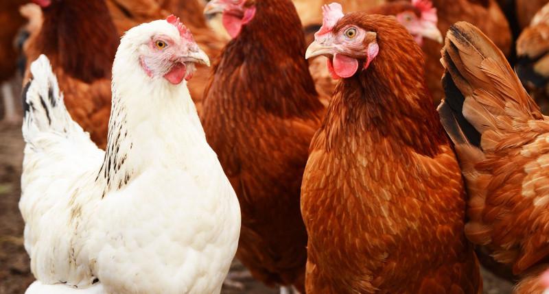 На сегодняшний день ООО «Тамбовская индейка» произведено 3,6 тысячи тонн мяса. Выход на полную проектную мощность запланирован на 2017 год.